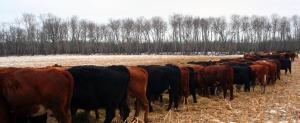 LivestockShelter_001