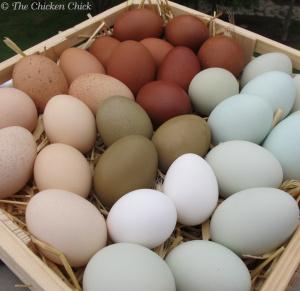 Eggs 6-5-12