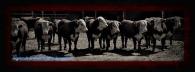 bulls-picmonkey