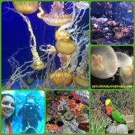 Aquarium_final