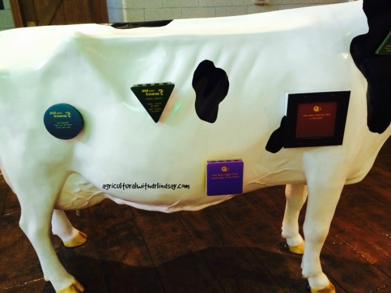 Educational cow-final
