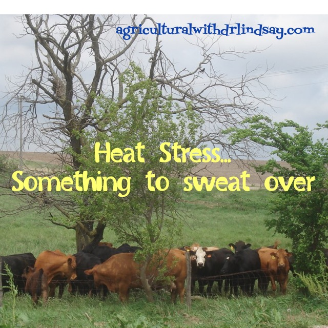 heat stress