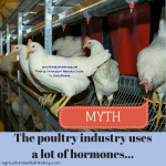 Hormone use in poultry... (2)