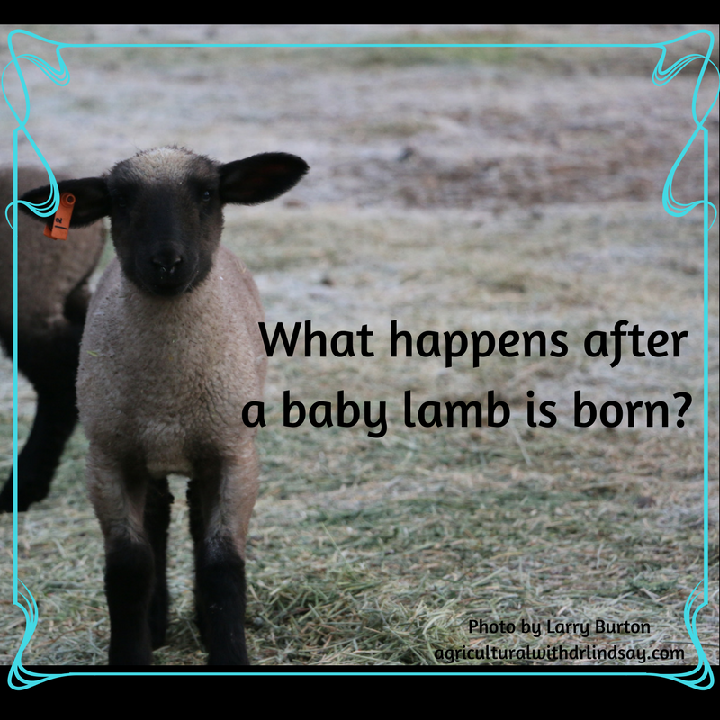 Particularly affects sheep under 1 year old