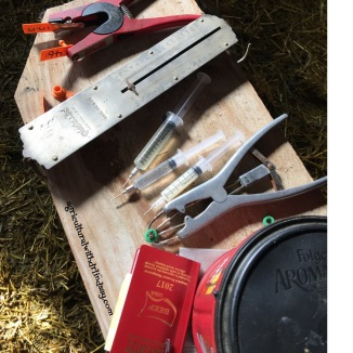 The tools we need to work lambs and ewes.